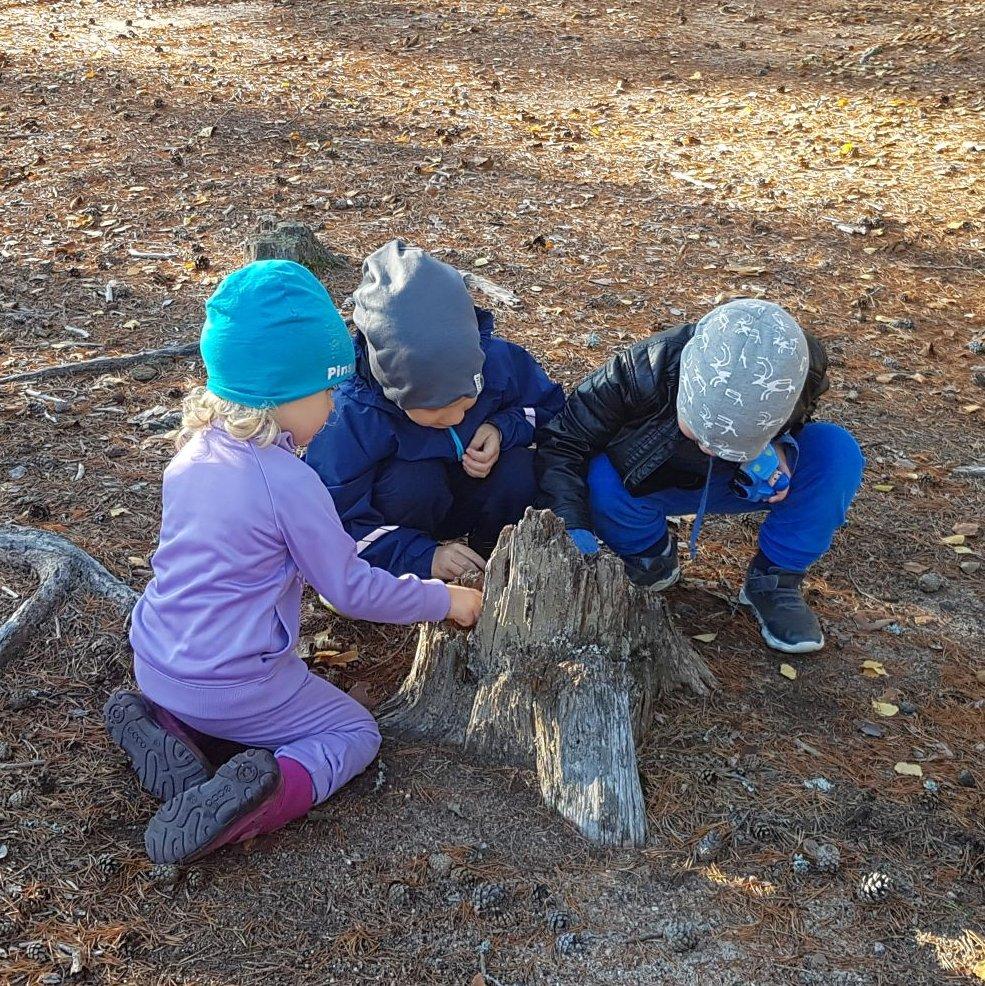 Kolme lasta leikkimässä kuivahtaneen kannon ympärillä.