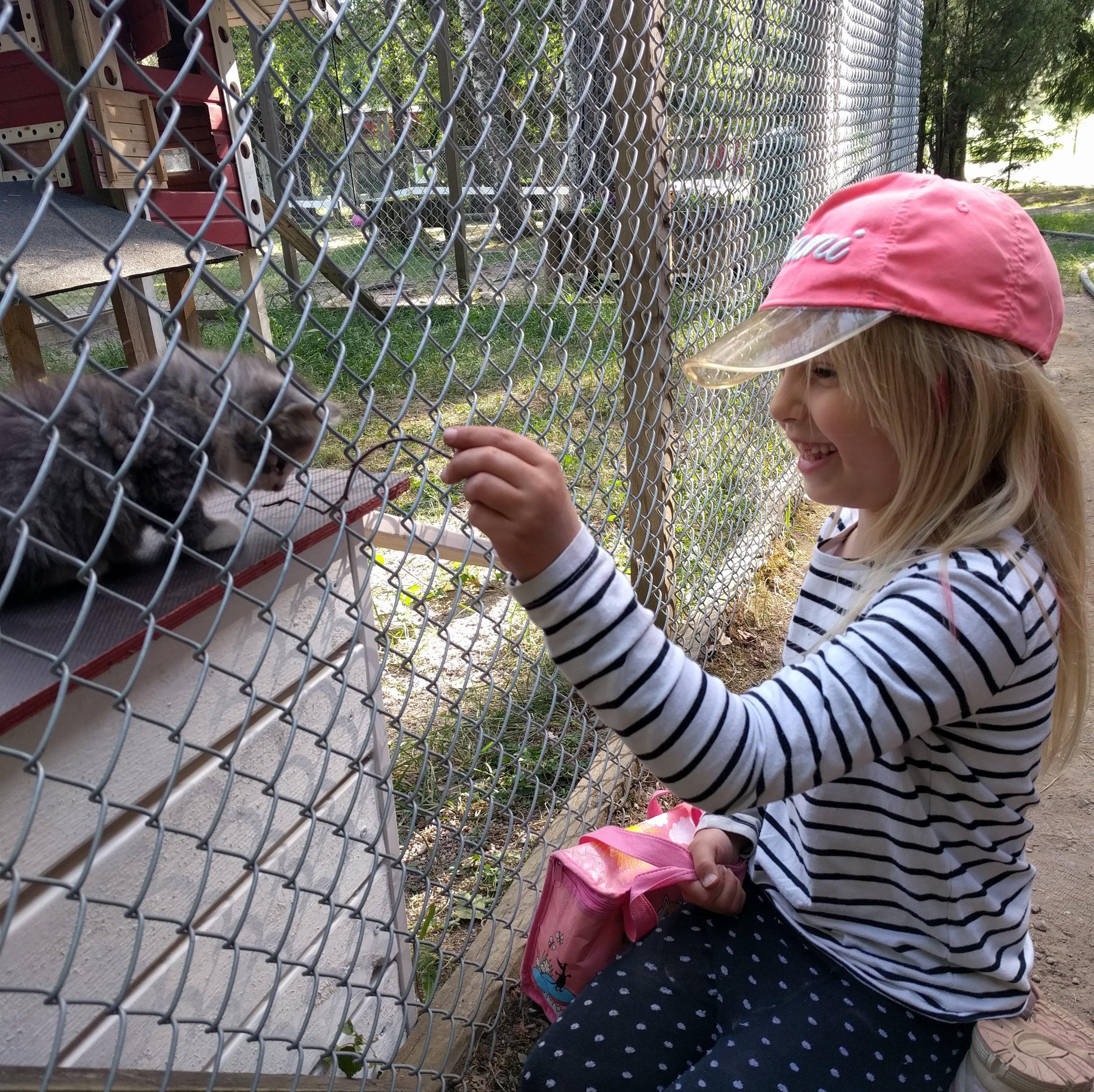 Naurava tyttö leikittää harmaata kissanpentua häkin läpi.